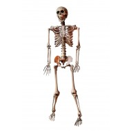 5 Posable Skeleton (1/1)